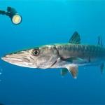 Cursos de filmación submarina