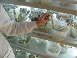Cuando la biotecnología marca la diferencia en materia de empleo