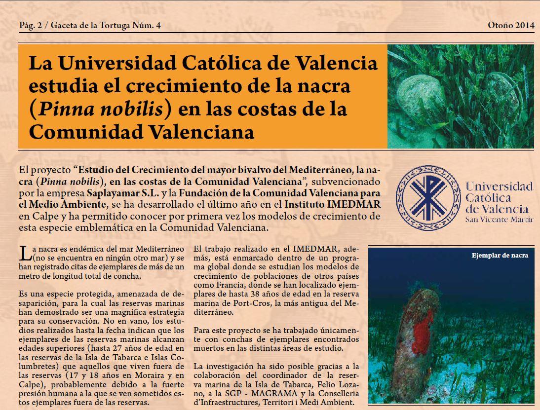 La nacra (Pinna nobilis) es un molusco que crece junto a la posidonia