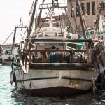 Investigadores en Ciencias del Mar de la UCV y la Cofradía de Pescadores de Calp refuerzan su alianza para potenciar la investigación pesquera