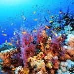 """""""Arrecifes. Oasis de vida"""" obtiene el premio al mejor largometraje documental en la 39 edición del Ciclo Internacional de Cine Submarino de San Sebastián"""