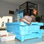 La protección del mar a través de la pesca artesanal. Xàbia apuesta por la cocina tradicional
