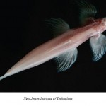 Francisco Nomdedeu: pez trepacataratas