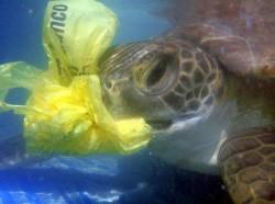 http://www.sogama.es/es/noticia/charlas-sobre-la-contaminacion-de-microplasticos-en-los-oceanos-y-jornadas-de-limpieza-de-re