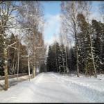 Experiencia Erasmus en Finlandia de 5 alumnos de la UCV de Enfermería