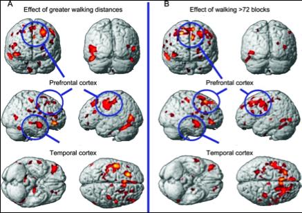 Cerebro y ejercicio.jpg