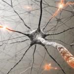 Cerebro y política, íntimamente ligados