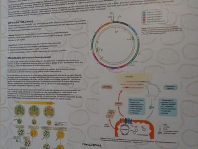 Defensa de TFGs del Grado en Medicina de la UCV