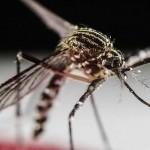 Virus Zika: historia de un virus emergente (1952)