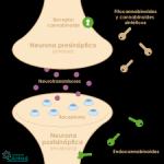 Sistema endocannabinoide: Fito cannabinoides y cannabinoides de síntesis