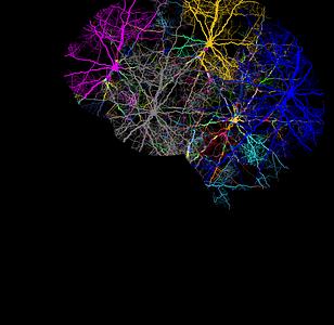 cranium-3244118__340