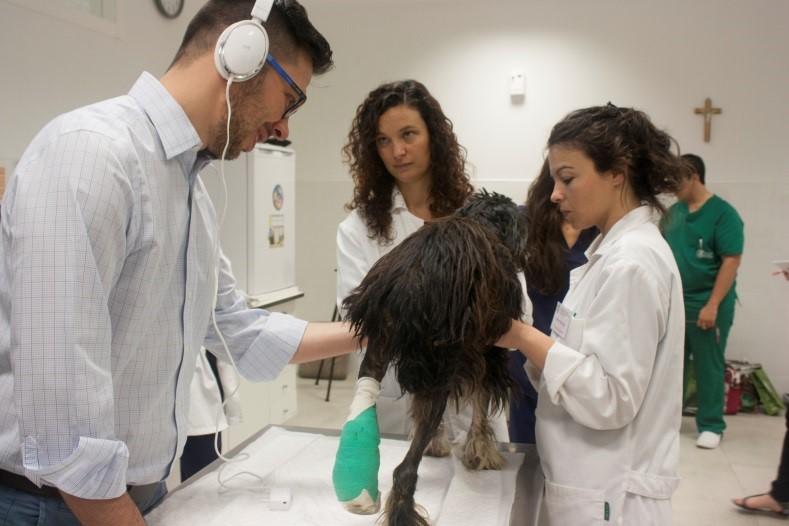 alumnos practicando en el Curso de aproximación teórico-práctica al paciente cardiópata
