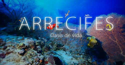 Portada Arrecifes