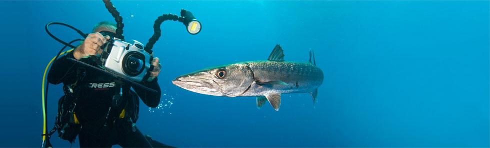La UCV organiza cursos de filmación submarina