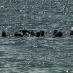 Empieza a funcionar el nuevo blog del grado en Ciencias del Mar (UCV)