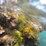 Los alumnos realizan una investigación oceanográfica multidisciplinar en Calpe
