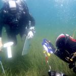 Ciencias del Mar investiga la posidonia y la nacra en la bahía de Kotor (Montenegro), a orillas del Adriático