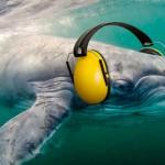 El corredor mediterráneo, un gran paso para los cetáceos