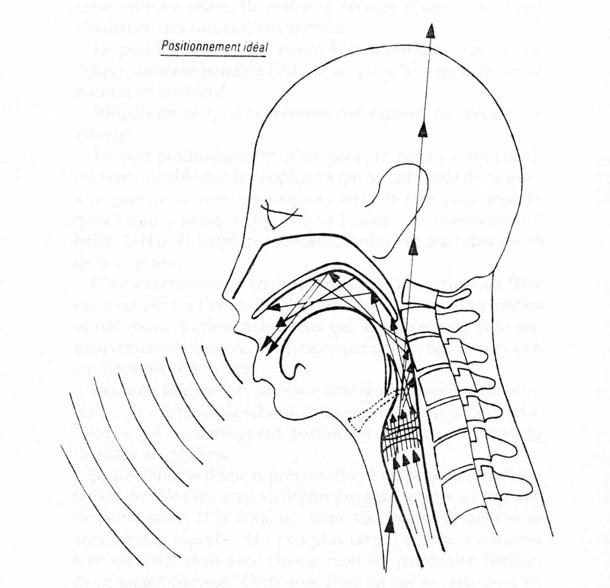 Posición ideal de cabeza y cuello