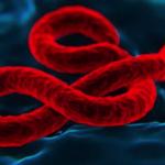 Nueva vacuna contra el Ébola confiere protección en monos.