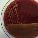 Reflexiones sobre la investigación en microbiología y la identidad de nuestra universidad.