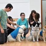 Terapia con animales en la Jornada de Actualización con motivo del Día Internacional de la Terapia Ocupacional