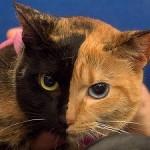 Una gata de dos caras