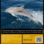 Charla sobre mamíferos marinos y tortugas que viven en las costas valencianas