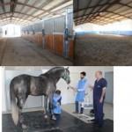 La Universidad Católica de Valencia dispone de un hospital clínico veterinario de grandes animales